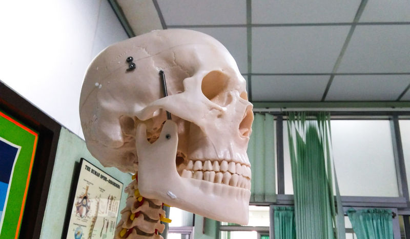 Close up of the anatomy skull in hospital. Orthopedics Treatment Care Room Scary Strange Mystery Horror Medical Medical School Hospital Humen Close Up Doctor  Body Part Science Education Anatomy Close-up Animal Skull Animal Skeleton Bone  Human Skull Skull Animal Bone Death Human Skeleton Model - Object Skeleton The End
