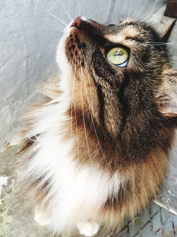Cat One Animal Pets Domestic Animals Domestic Cat Feline Close-up Animal Themes Whisker