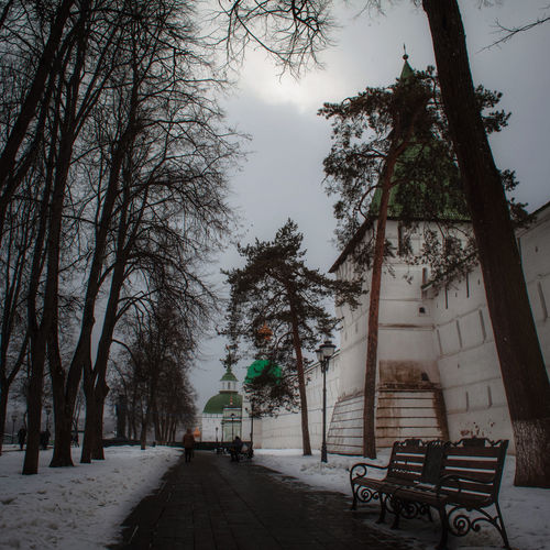 Trees and plants in park during winter
