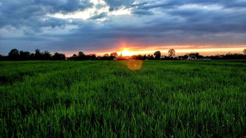 Photo Taken On Smartphone Farm Field Cloud - Sky Tree Sky Sunset Beauty In Nature Agriculture Crop  Growth Rural Scene Tranquil Scene Landscape Tranquility Outdoors Scenics Green Color Cereal Plant Freshness First Eyeem PhotoPhoto Taken On SmartphonePhoto taken on smartphone