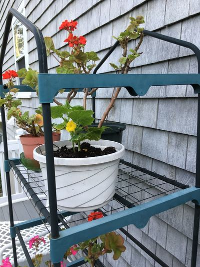 Lines And Angles Architecture Building Exterior Built Structure Day Flower Flower Pot Flowering Plant Freshness Gardening Greenhouse Growth Leaf Nature No People Outdoors Plant Plant Nursery Plant Part Potted Plant Railing