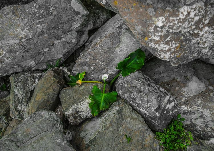 High angle view of rocks in water