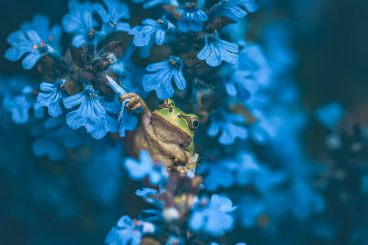 Close-up of frog on blooming flowers