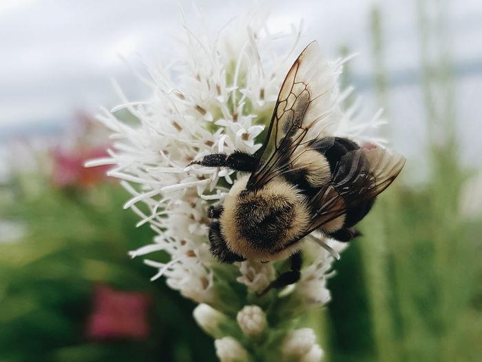 😍 Flower Head