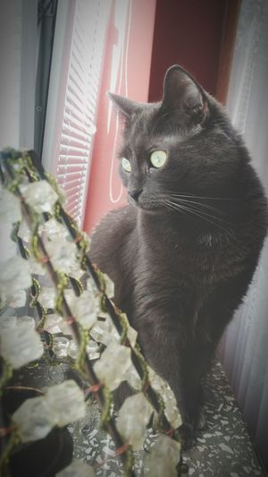Photo Supernormal Myfrend Photography Moj Kot Mycat Kociarze Catlove Myanimal SuperCat Animal Pets Feline Domestic Cat Portrait Home Interior Curtain Looking At Camera Alertness Window Close-up Cat Whisker Stray Animal Kitten Animal Eye