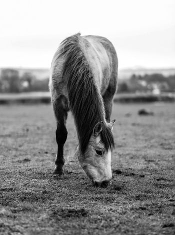 handsome boy B&w Horse Horses Cheval Equine Equestrian Equestrianstyle Equinephotography One Animal Animal Animal Themes Animal Wildlife Mammal Nature