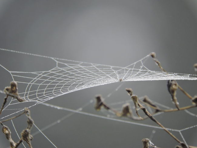 foggy Morning Animal Themes Animal Wildlife Animals In The Wild Close-up Day Focus On Foreground Fragility Insect Nature No People One Animal Outdoors Spider Spider Web Spider Web, Dew, Morning, Web