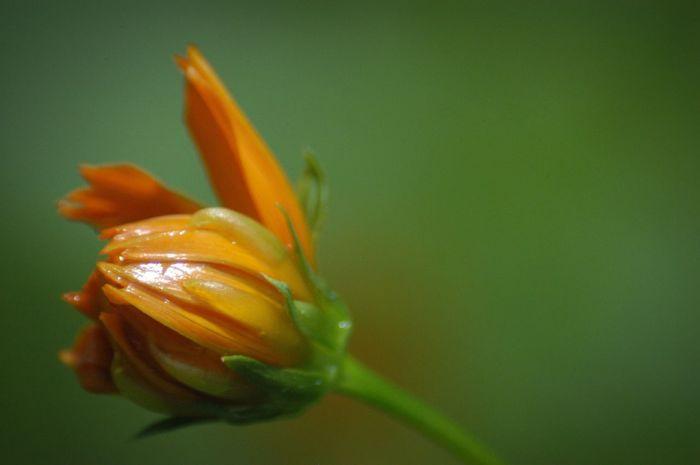 ねえ今何してる? Nature Flower キバナコスモス Dramatic Angles