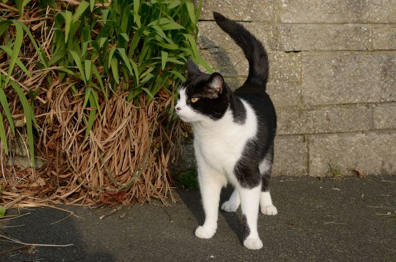 black & white cat Mammal Domestic One Animal Pets Domestic Animals Cat Feline Vertebrate Domestic Cat No People Day Full Length Looking Plant Sitting Standing High Angle View Whisker