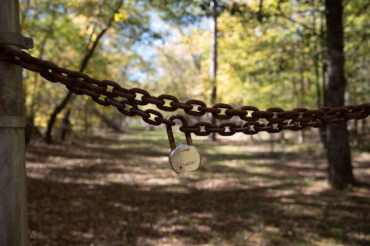Hanging Metal Chain Focus On Foreground Day Lock Safety No People Outdoors Nature Emotion Protection Forest Autumn