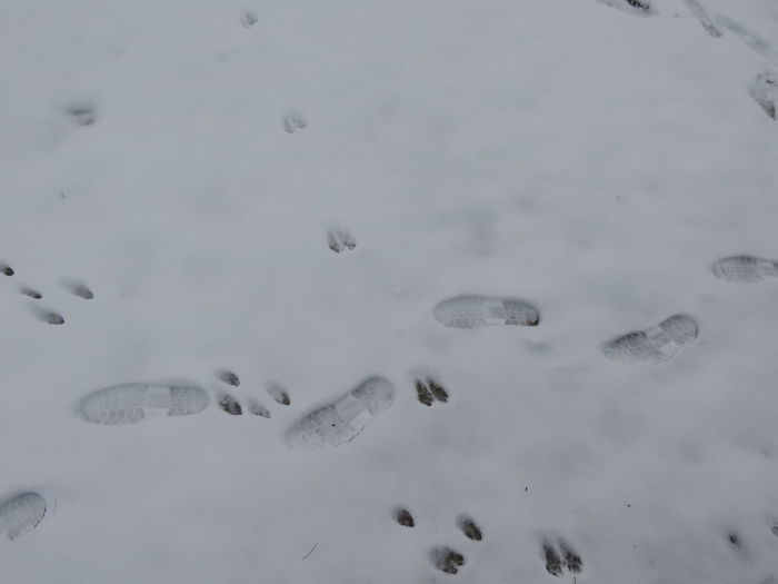 Animal Footprints Footprints Tree Winter Animal Themes Day Foots Meaning Meaningful  Mountain Nature No People Outdoors White White Background