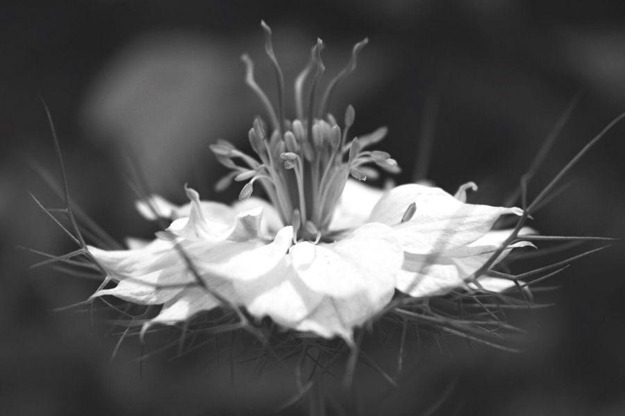 Good morning Flowerporn Flower Collection EyeEm Nature Lover Blackandwhite Black And White