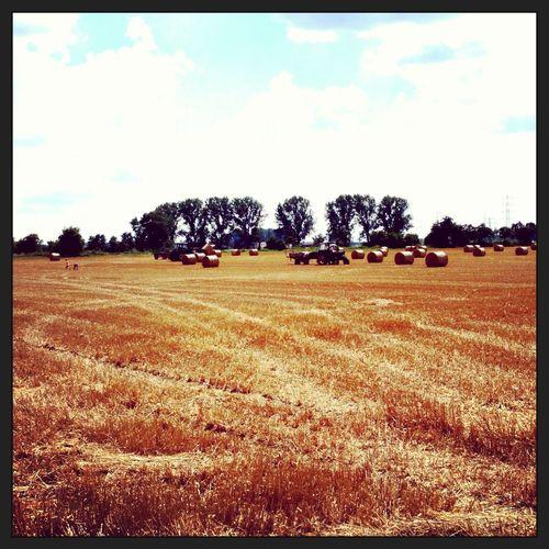 Ernte Harvest Pfungstadt Farm