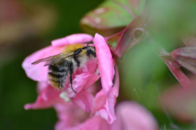 BeesDoingTheirBit Nature On Your Doorstep MyBackGarden