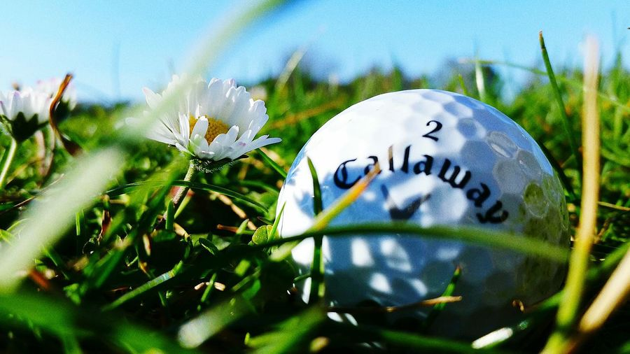 Golf Golf Ball Callaway Nature First Eyeem Photo
