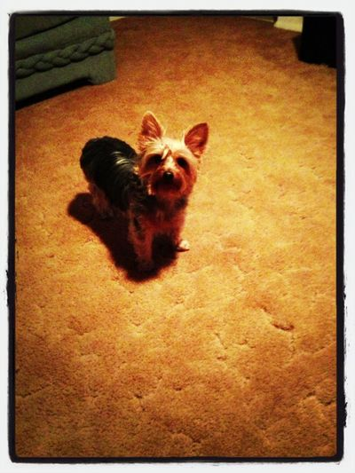 My dog #lmp