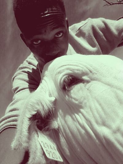 Farm life is just awesome...this is a tamed Brahman bull. Enjoying Life Check This Out Hanging Out Taking Photos #Tamed