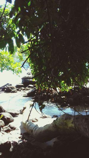 Tree Water Underwater Beach Sea Branch Reflection Rippled Sunlight Close-up