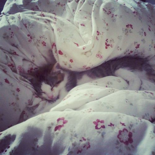 Spink like a baus. Sleeping Kitty Mini Mcguiness awesome cat instagram instadaily instabeauty