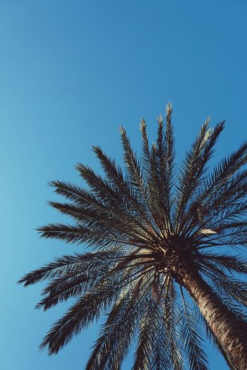 palm tree in the park Palm Tree Palm Tree Plant Leaves Leaf Branch Branches Green Sky Blue Nature Park Outdoors Street Minimalism Minimal Abstract Low Angle View Tropical Climate Tropical Beauty In Nature Clear Sky Palm Leaf Day
