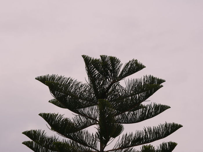 Nature view Tree Plant Sky Growth Palm Tree Nature Tropical Climate No People Beauty In Nature Tranquility Low Angle View Day Copy Space Leaf Clear Sky Outdoors Green Color Palm Leaf Scenics - Nature Branch