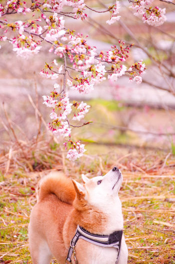 View of dog on flower