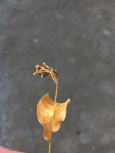 Plant Part Leaf Vulnerability  Plant Close-up Fragility Day