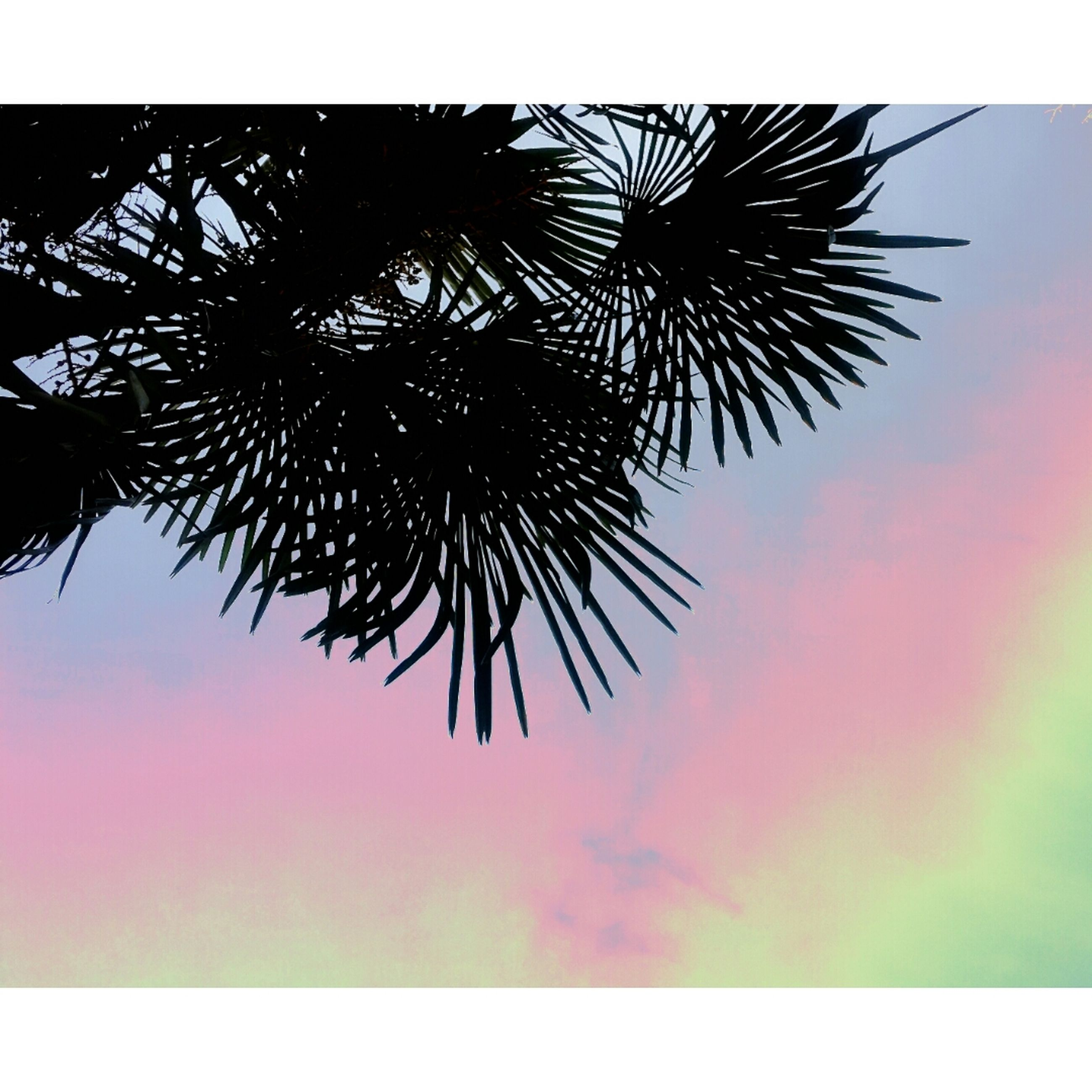 low angle view, sky, silhouette, nature, beauty in nature, growth, auto post production filter, tree, leaf, sunset, outdoors, no people, palm tree, transfer print, tranquility, backgrounds, clear sky, branch, dusk, close-up