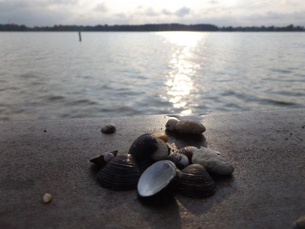 Grass Lake Michigan Grass Lake Nature Seashells, Sand And Water Sea Shells Lake View Lake Water Eyeemphoto The Great Outdoors - 2017 EyeEm Awards