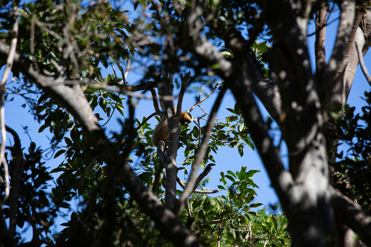 Tree Plant Animal Wildlife Animals In The Wild Animal Themes Animal Vertebrate One Animal Branch Perching Low Angle View Bird Nature Growth Day No People Green Color Beauty In Nature Selective Focus Outdoors Monkey Monkeys Monkey Face