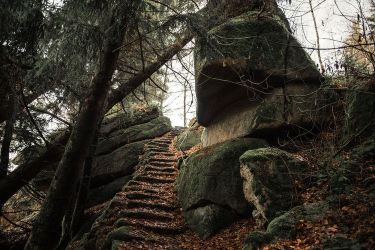 The majestic one Beauty In Nature Branch Day Growth Low Angle View Nature No People Outdoors Rock Tranquil Scene Tranquility Tree