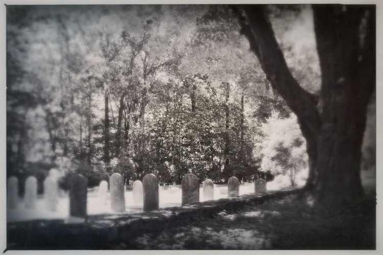 Graveyard Graveyard Beauty Cemetery Black And White Greyscale Rural Shades Of Grey Noir Rural Landscape Tree