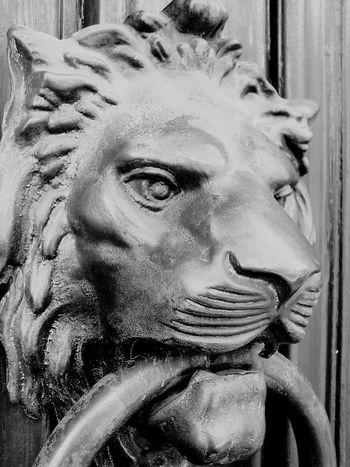 Door Animalface Animals Leon Blackandwhite Photography Black & White