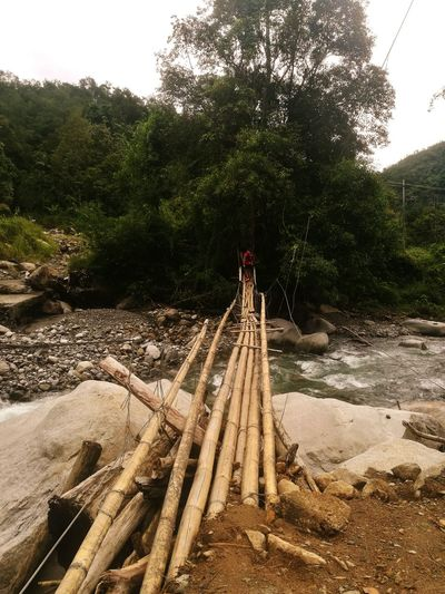 Dangerous bamboo bridge Day Cloud - Sky Tranquility Outdoors No People Scenics Growth Forest Beauty In Nature Nature Mountain Tree Landscape Mountain Range Tea Crop Astronomy Fog Travel Car Road Transportation One Man Only Clear Sky Beach Standing