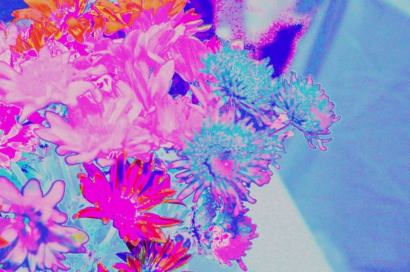 Flowers Invertedcolors Colors Colorful Blue Purple Pink Red Modern