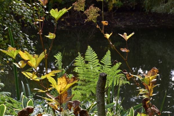Beauty In Nature Beth Chato Gardens Close-up Day Elmstead Market Essex Fern Framed Growth Horizontal Leaf Nature No People Outdoors Plant Pond Reflection Tree Water