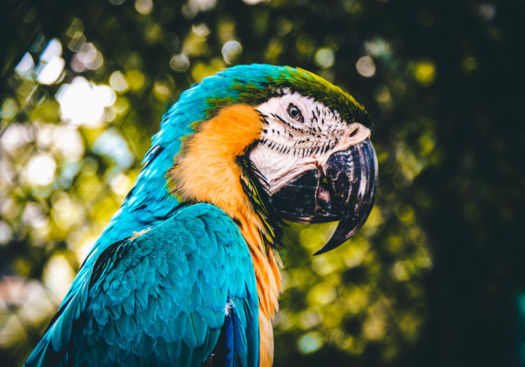 Animal Themes Animal Animal Wildlife Vertebrate Bird One Animal Parrot Macaw Focus On Foreground Animals In The Wild Gold And Blue Macaw Blue Nature Close-up Beak No People Day Animal Body Part Perching Tree Animal Head