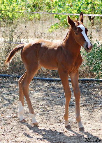 Horse Herbivorous Horse Photography  Nikonphotography Nikonespaña NikonD60 Domestic Animals