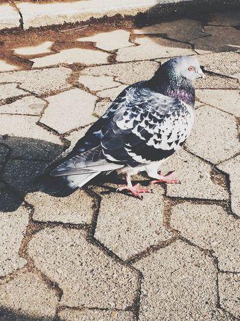 Seoul Korea Bird