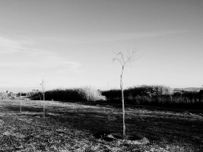 Filters Trees Landscape Outcast