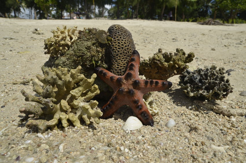 Animal Themes Animals In The Wild Beach Beauty In Nature Close-up Coral Reef Corals Day Live For The Story Nature No People One Animal Outdoors Sand Sea Sea Life Shore Star Starfish  Summer Summertime Travel Travel Destinations UnderSea Vacations Sommergefühle