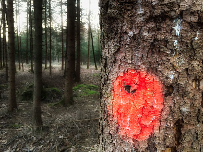 Gekennzeichnet Close-up Day Forest Isolated Color Marked Nature No People Outdoors Red Spooky Tree Tree Trunk