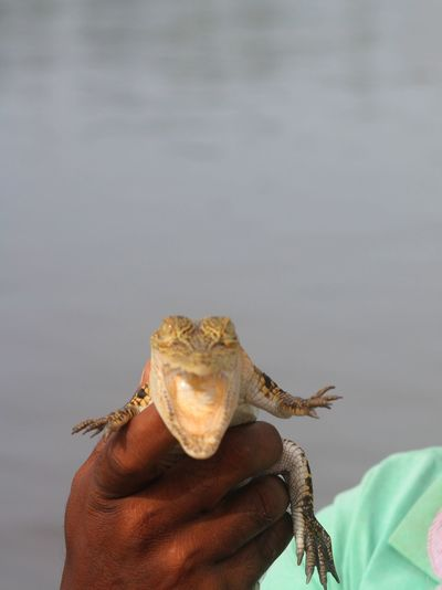 Close-up of man holding hatchling against river