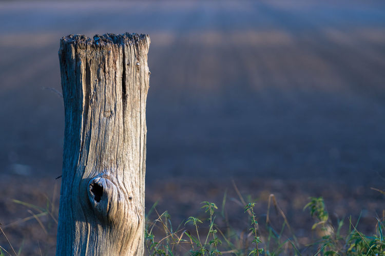 Close-up of wooden post on land