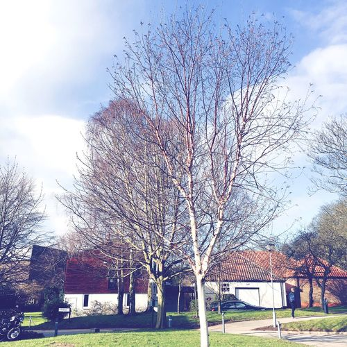 York Yorkshire Tree Winter Bare Tree Clean Clear Sky Blue Enjoying Life Cool Calm Clean Peace University Campus Road Traveling British