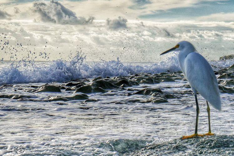 Snowy Egret Perching On Sea Against Sky