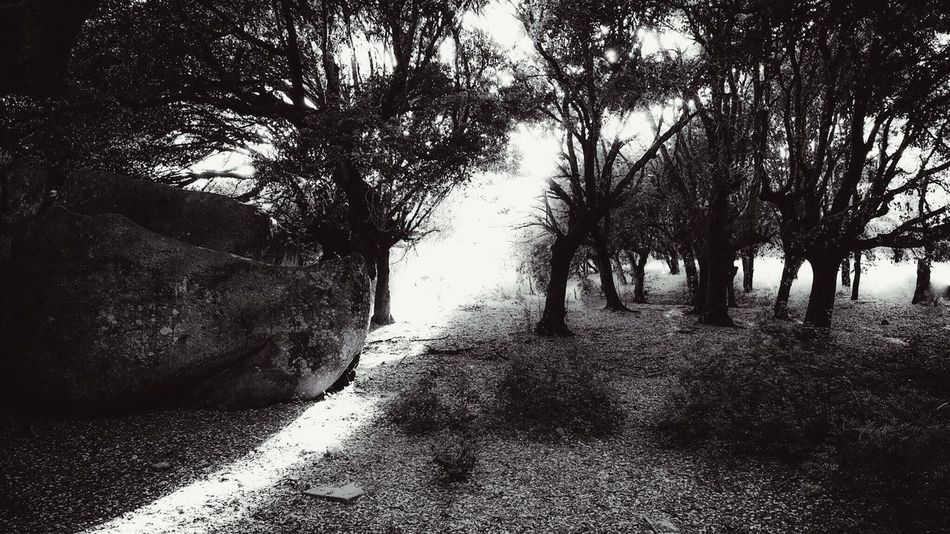 Guided by the light... Mystical Light And Shadow Power Place Kraftort Palau Sardegna Nature Back Lit Sunlight Enchanted Forest Spiritual Magicoflight PreciousMoments Sacred Places Gowiththeflow Tree Shine Enchanted  Sunbeam Energetic Blackandwhite Beauty In Nature Energy