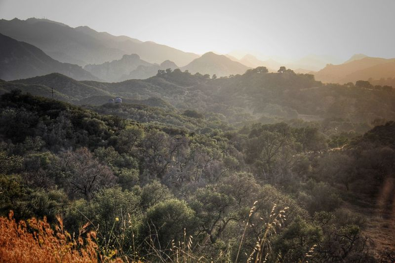 Hills west of Los Angeles Mountain Nature Landscape Beauty In Nature Tree Scenics Sky Outdoors No People Adventure Day