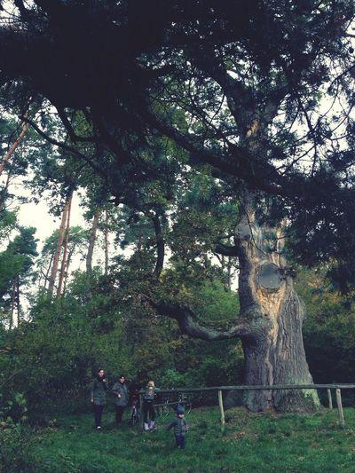 Trees TreePorn Nature