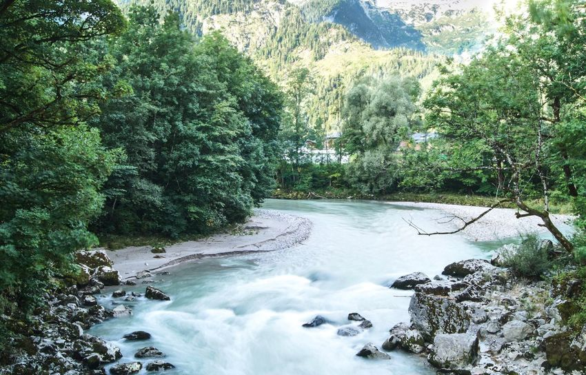 Blue River with Rocks Wanderlust Sunrise Water Plant Tree Nature Beauty In Nature Scenics - Nature Growth Motion No People Tranquility Day Green Color Forest River Flowing Water Land Tranquil Scene Sunlight Non-urban Scene Outdoors